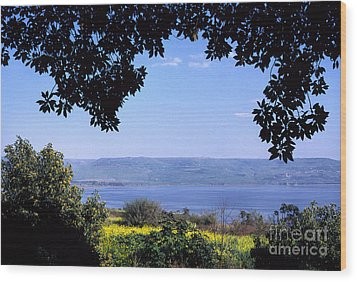 Sea Of Galilee From Mount Of The Beatitudes Wood Print