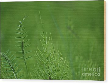 Wood Print featuring the photograph Sea Of Green by Bianca Nadeau