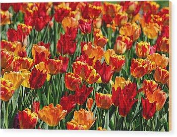 Sea Of Tulips II Wood Print by Dick Wood