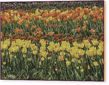Sea Of Tulips Wood Print by LeeAnn McLaneGoetz McLaneGoetzStudioLLCcom