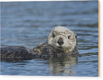 Sea Otter Alaska Wood Print by Michael Quinton