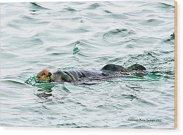 Sea Otter In Northern Cali Wood Print by Rebecca Adams