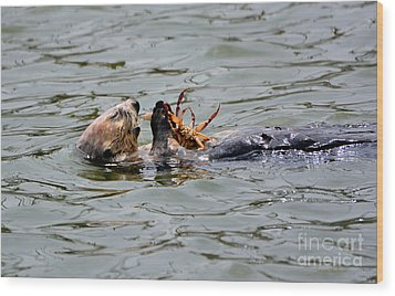 Sea Otter Munching On Crab Leg Wood Print