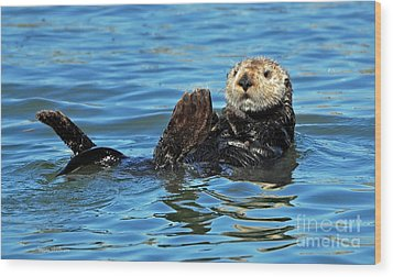 Wood Print featuring the photograph Sea Otter Primping by Susan Wiedmann