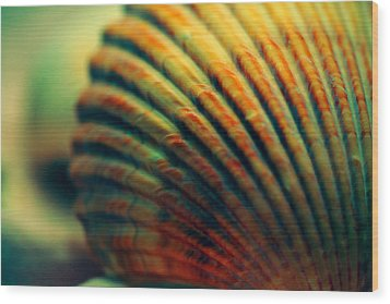 Sea Shell Art 1 Wood Print by Bonnie Bruno