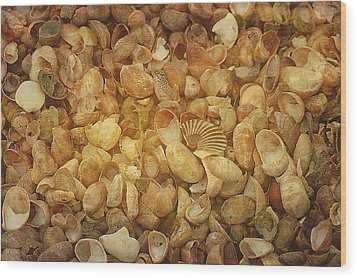 Seashells Red River Beach Harwich Cape Cod Ma Wood Print by Suzanne Powers