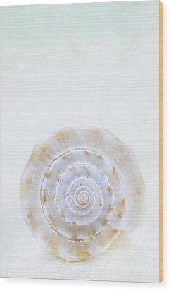 Sea Shell Wood Print by Stephanie Frey