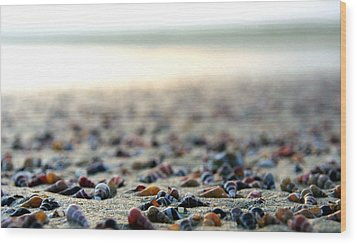 Sea Shells By The Sea Shore Wood Print by Kaleidoscopik Photography