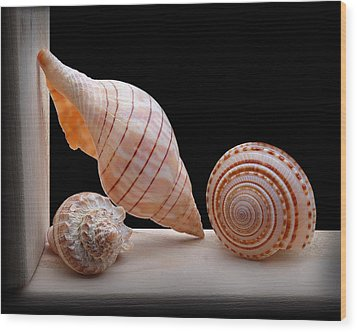 Sea Shells Wood Print by Krasimir Tolev