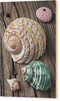 Sea Shells With Urchin  Wood Print by Garry Gay