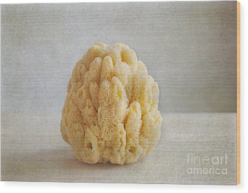Wood Print featuring the photograph Sea Sponge by Aiolos Greek Collections