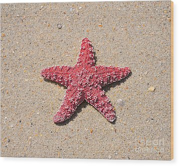Sea Star - Red Wood Print by Al Powell Photography USA