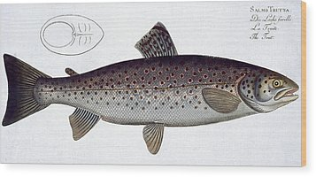 Sea Trout Wood Print by Andreas Ludwig Kruger
