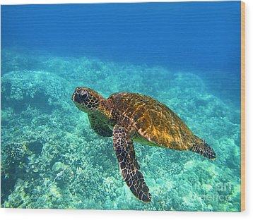 Sea Turtle Close Up Wood Print by Bette Phelan