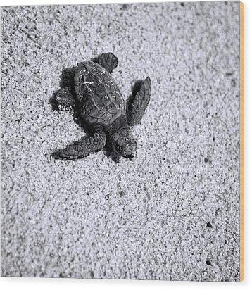 Sea Turtle In Black And White Wood Print