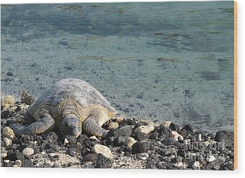 Sea Turtle Wood Print by Renie Rutten