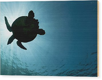 Sea Turtle Silhouette Wood Print
