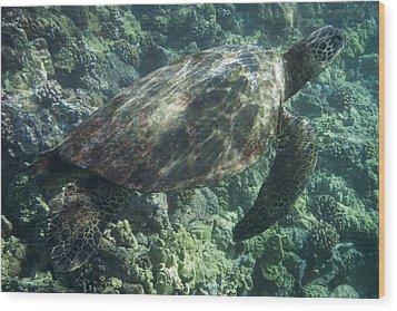 Sea Turtle Surfacing Wood Print