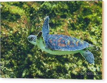 Sea Turtle Swimming In Water Wood Print by Dan Friend