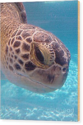 Sea Turtle Wood Print by Thomas OGrady