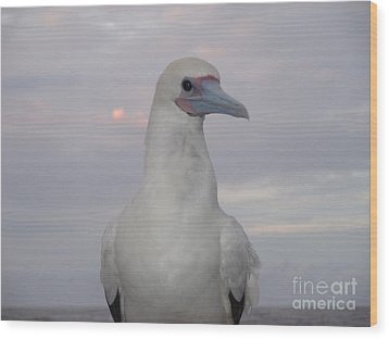 Wood Print featuring the photograph Seabird by Laura  Wong-Rose