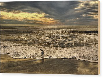 Wood Print featuring the photograph Seagull Sunset Bath by Julis Simo