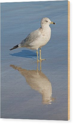 Seagull Wood Print by Alicia Knust