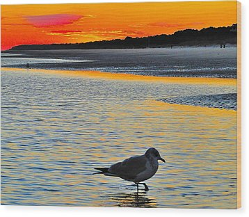 Seagull At Sunset Wood Print by Cindy Croal