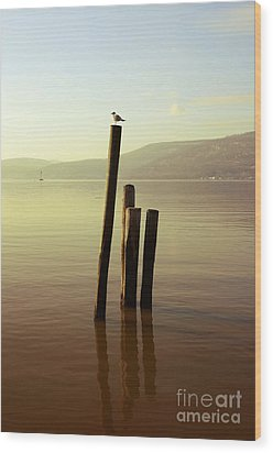 Wood Print featuring the photograph Seagull At Sunset by Rafael Quirindongo