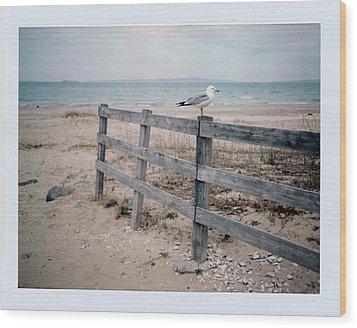 Seagull Wood Print by Brady D Hebert