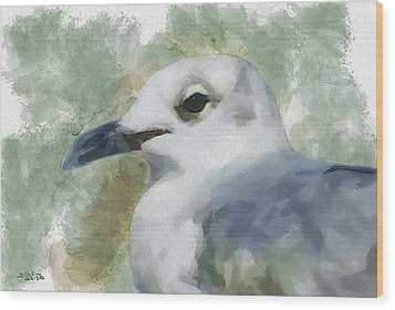 Seagull Closeup Wood Print by Greg Collins