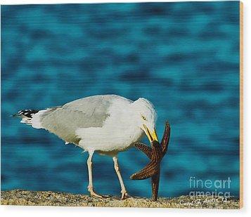 Seagull Dancing With A Star Wood Print by Carol F Austin