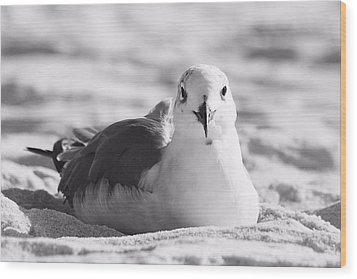 Wood Print featuring the photograph Seagull by Elizabeth Budd