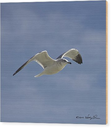 Wood Print featuring the photograph Seagull Flight I by Kathy Ponce