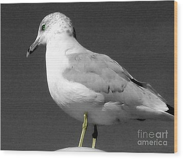 Wood Print featuring the photograph Seagull In Black And White by Nina Silver