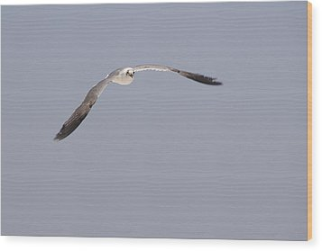 Wood Print featuring the photograph Seagull In Flight Against A Blue Sky by Charles Beeler
