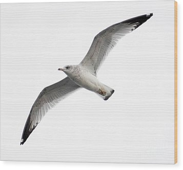 Wood Print featuring the photograph Seagull In Flight by Anita Oakley