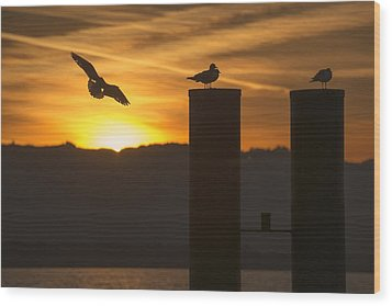 Seagull In The Sunset Wood Print by Chevy Fleet