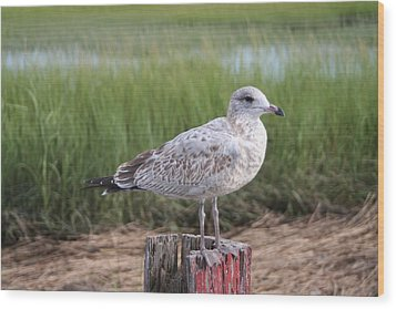 Wood Print featuring the photograph Seagull by Karen Silvestri
