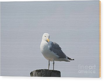 Seagull Looking For Some Food Wood Print by John Telfer