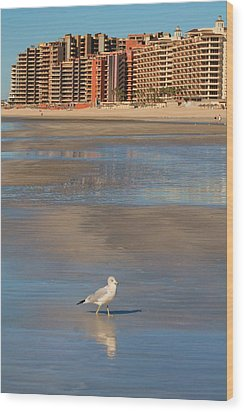 Wood Print featuring the photograph Seagull Motel by Alicia Knust