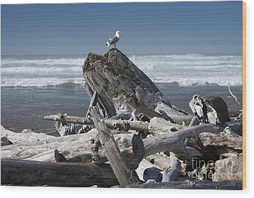 Seagull On Oregon Coast Wood Print by Peter French