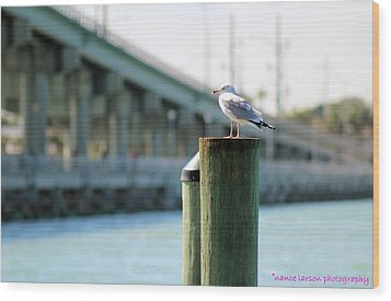 Seagull On The Dock Wood Print