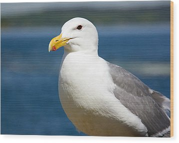 Seagull On The Sound Wood Print
