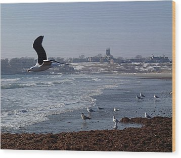 Seagull Wood Print by Robert Nickologianis