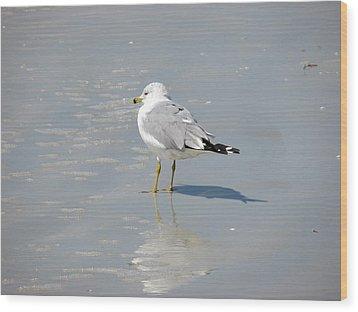 Seagull Shadows Wood Print by Rosie Brown