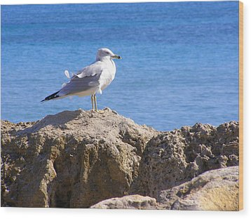 Wood Print featuring the photograph Seagull by Artists With Autism Inc