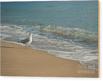 Seagull Walking On A Beach Wood Print by Sharon Dominick