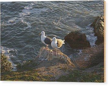 Seagulls Aka Pismo Poopers Wood Print by Barbara Snyder