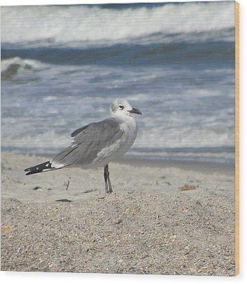 Seagulls At Fernandina 2 Wood Print by Cathy Lindsey